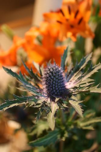 Flowers Not Traditionally Used For Ikebana  Quinn