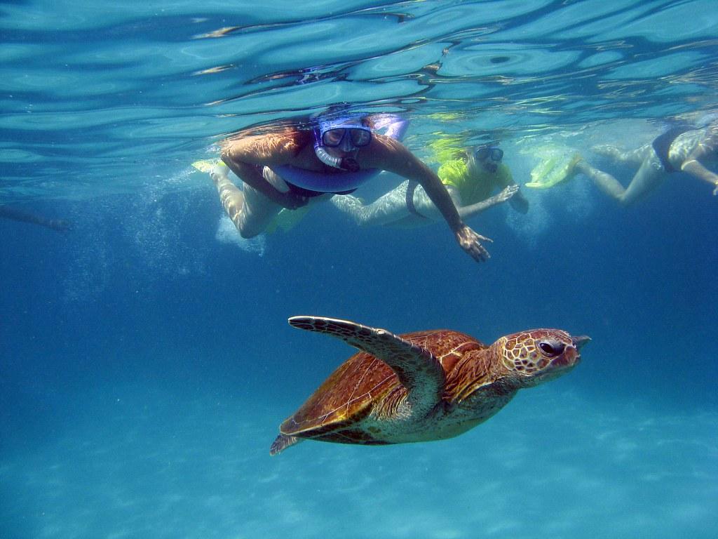 Ningaloo Reef Snorkel Photo By Marine Biologist Guy On