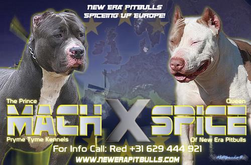 4510958818 25caa218f3 Is A Pitbull A Good Family Dog