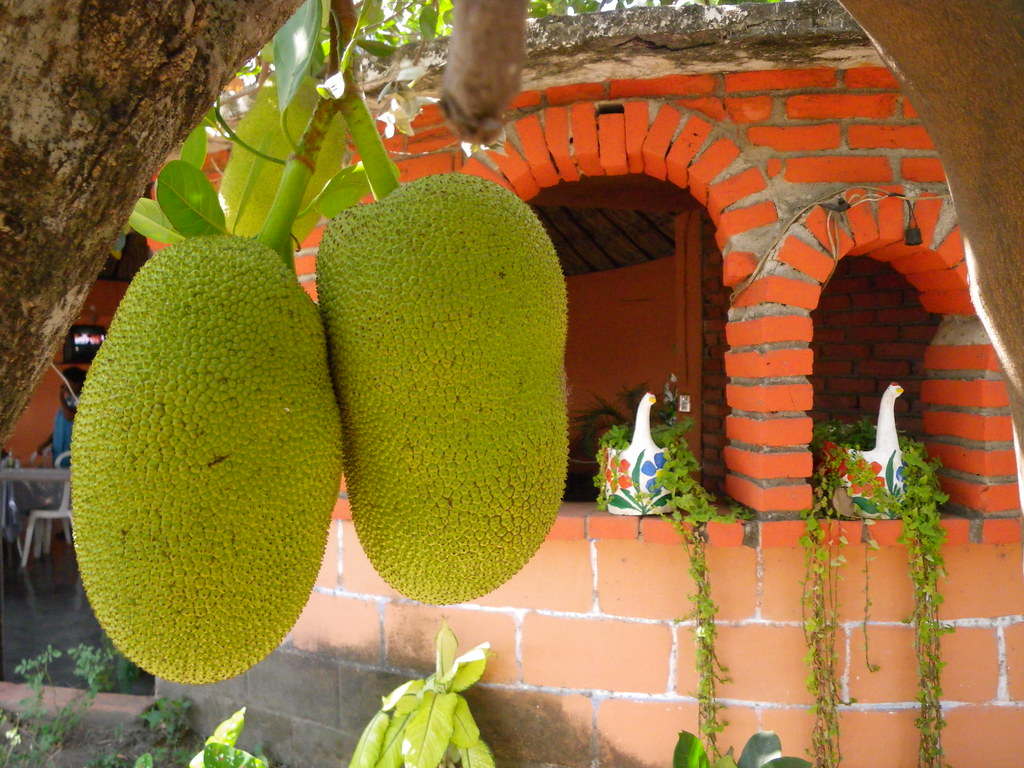 YACA  La fruta de los mil sabores originaria de la India y  Flickr