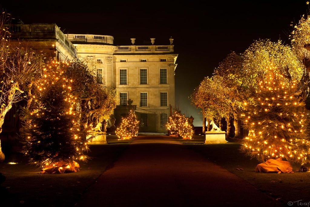 Christmas Trees Chatsworth Taken Poking The Camera