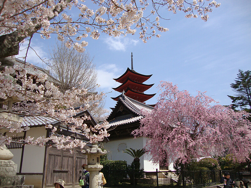 Jordan 3d Wallpaper Pagoda On Miyajima Island Japan Surrounded By Cherry