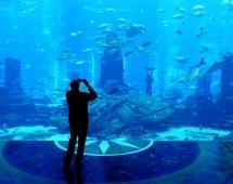 Dubai - Atlantis Aquarium Little Crop