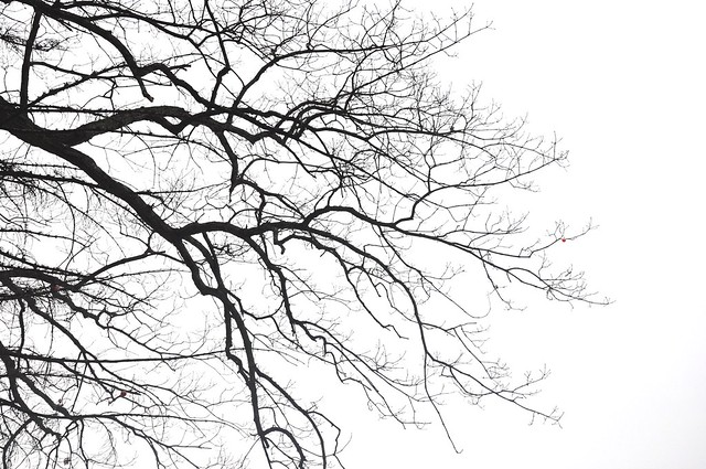Branches texture  Flickr  Photo Sharing