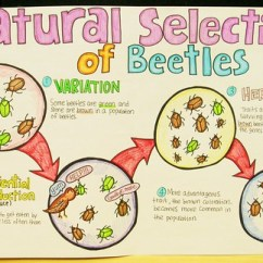 Class Diagram Library 9 Wicket Croquet Court Natural Selection Of Beetles | This Amazing Poster Was Creat… Flickr