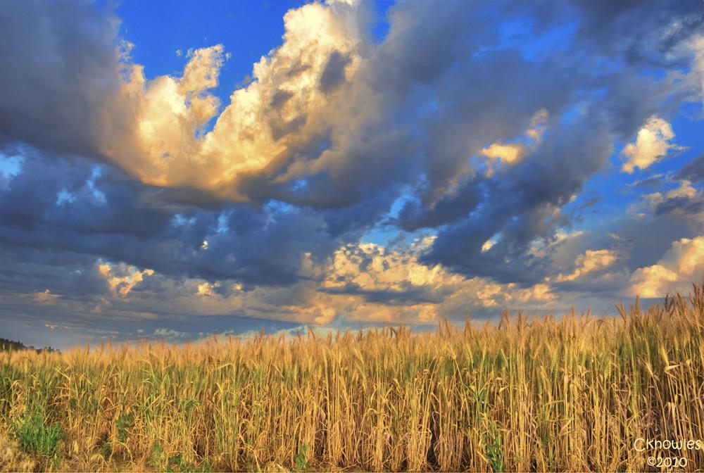 Palouse Wheat Field Sunrise A Compliment To A