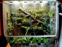 Orchid cool vivarium | 2010-07-20 Mouse over the photo to ...