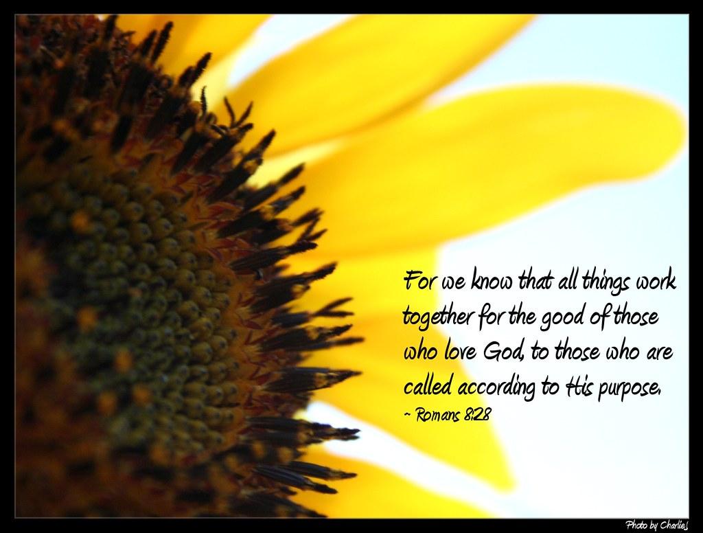 Free Fall Scripture Wallpaper Sunflower Romans 8 28 My Life Verse Is Romans 8 28