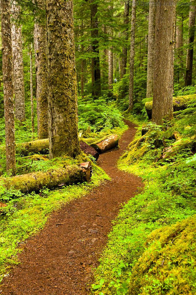 Fall Trees Wallpaper Thick Forests To Alpine Meadows Slushy Wet Muddy