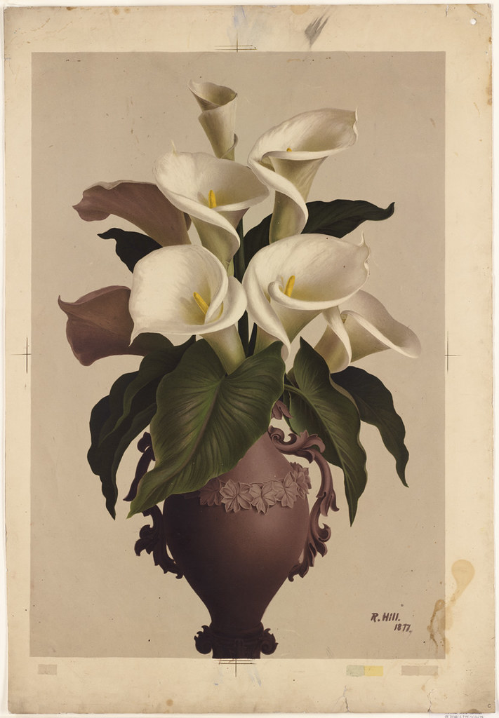 Calla Lilies in Vase  File name 07_11_000997 Title