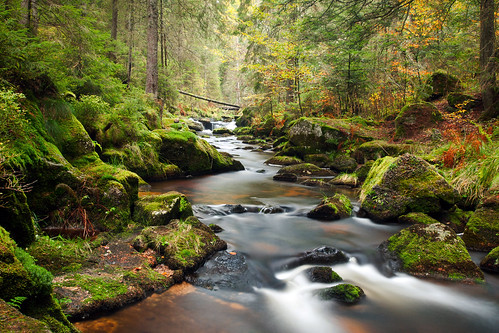 Fall Wooded Wallpaper Fairy Tale Forest Andreas Wonisch Flickr