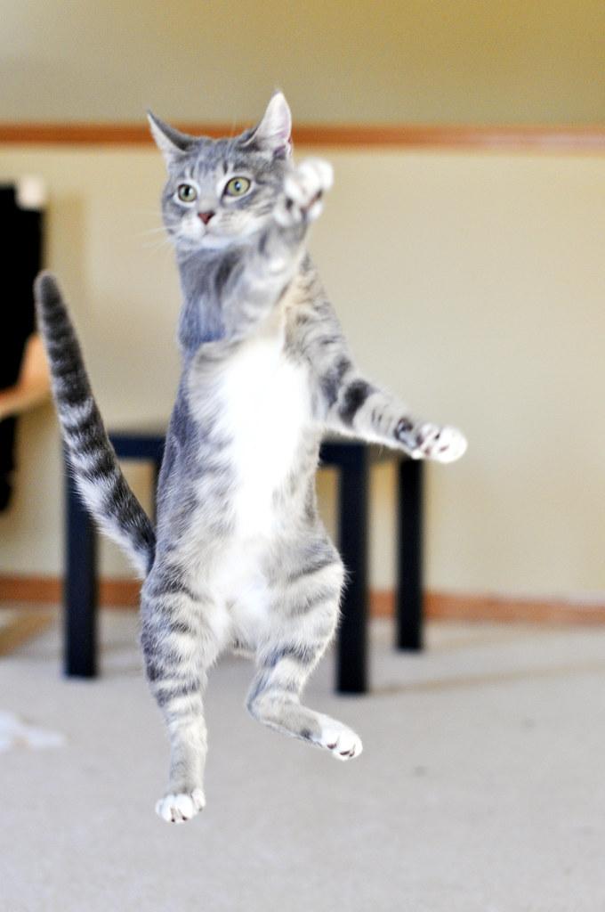 lucy s kitty dance