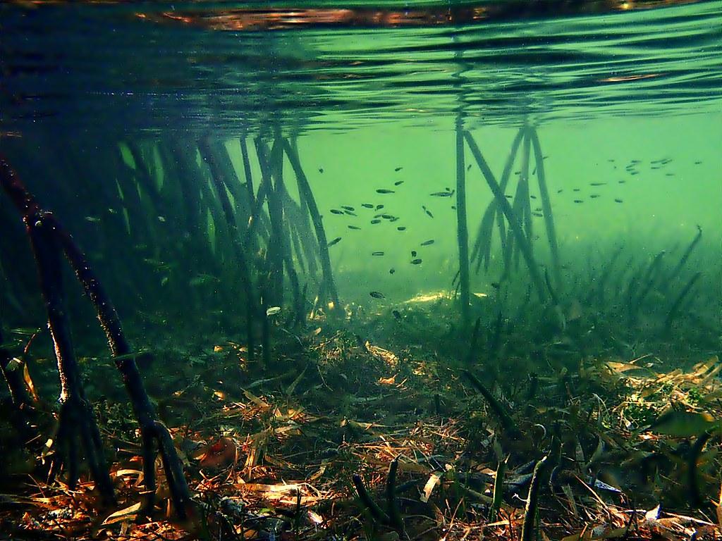 White Wave 3d Wallpaper Scout Key Mangrove Ecosystem Florida Keys Under The
