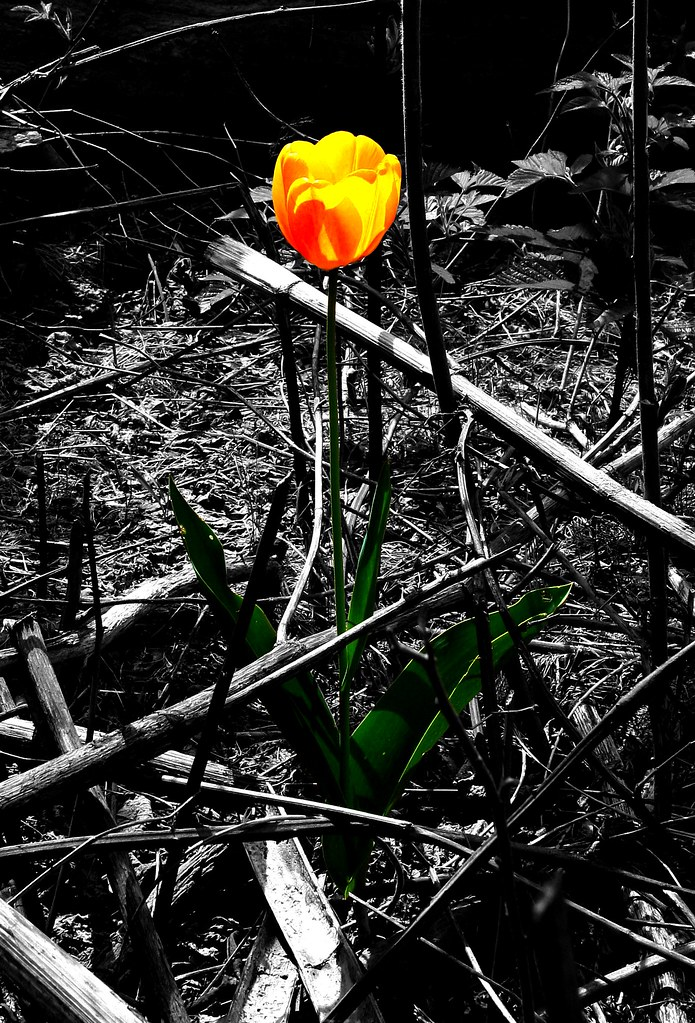 Lone Flower Growing Among The Destruction in Centralia PA  Flickr
