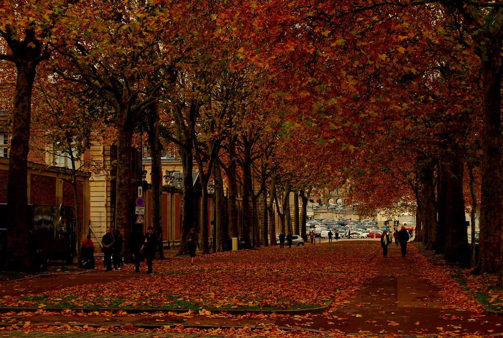 Vermont Fall Foliage Wallpaper Autumn In Paris A Lane Filled With Withering Autumn