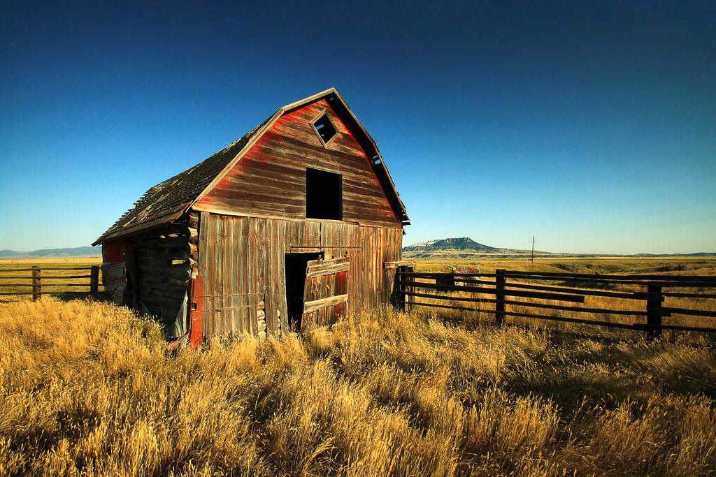 Rural Noir  An old wooden barn withering away outside of