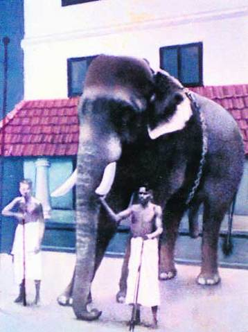 CHENGALLURRANGANATHAN  The Tallest Elephant Ever Lived