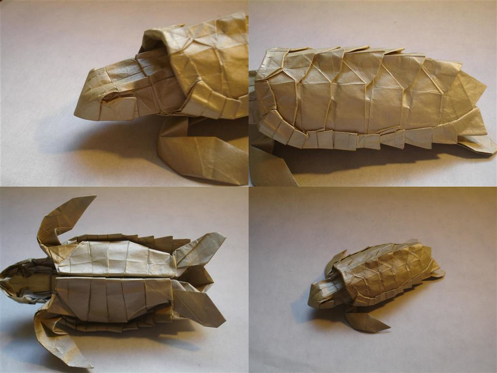 paper origami turtle diagram opel vectra c wiring loggerhead sea details designed by