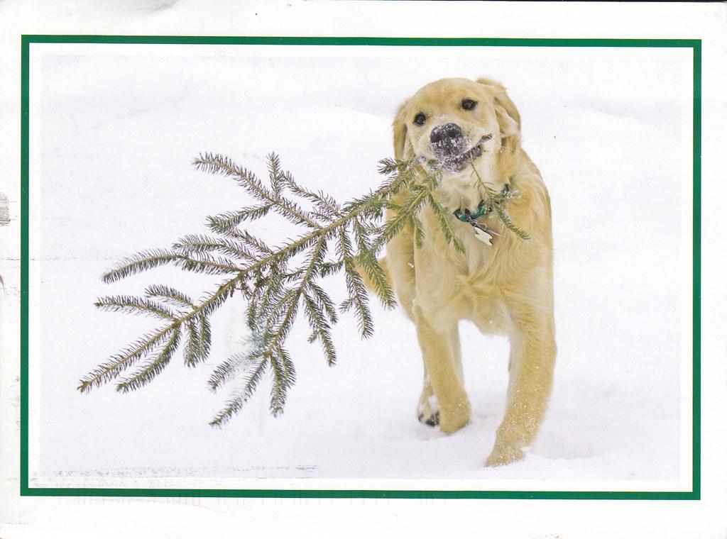 Christmas Dog Postcard 2010 Christmas Card RR 52 From