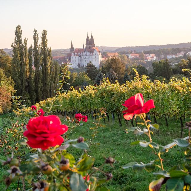 Weinsicht 2011