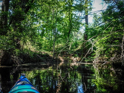 Old Santee Canal-158