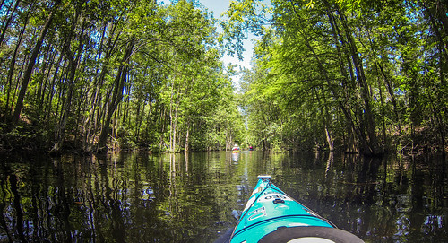 Old Santee Canal-115