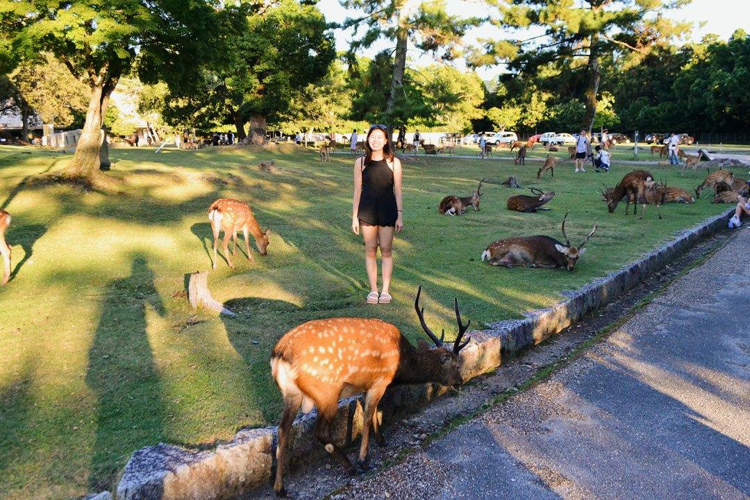 Nara Osaka City Travel Guide
