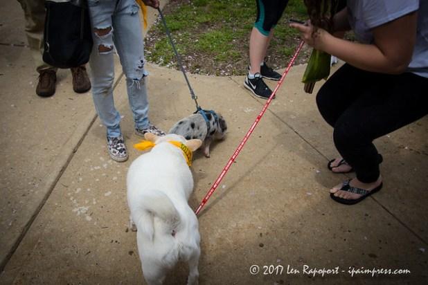 Monmouth SPCA Dog Walk 2017