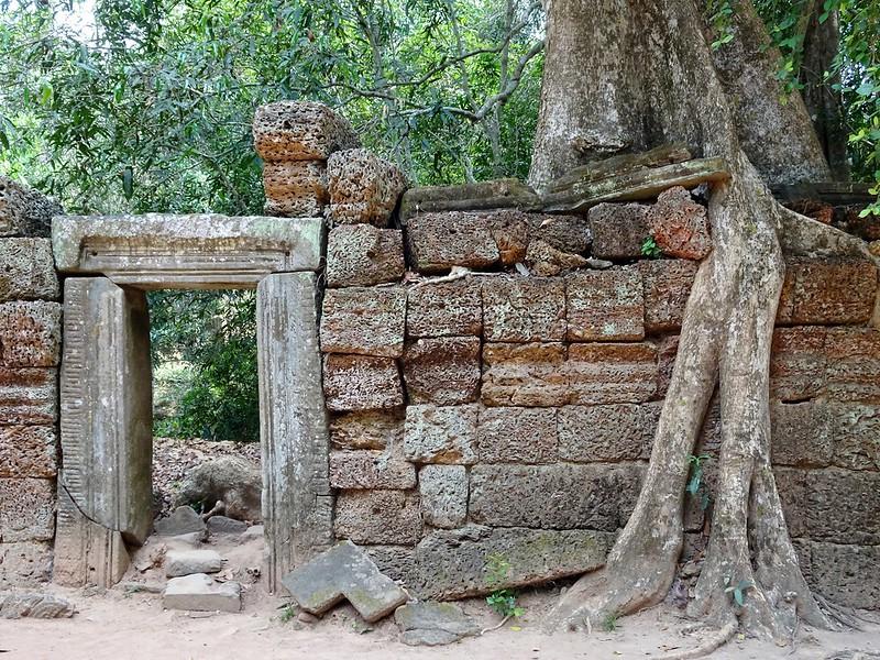 Ta Prohm, the jungle temple, Siem Reap, Cambodia - the tea break project solo travel blog