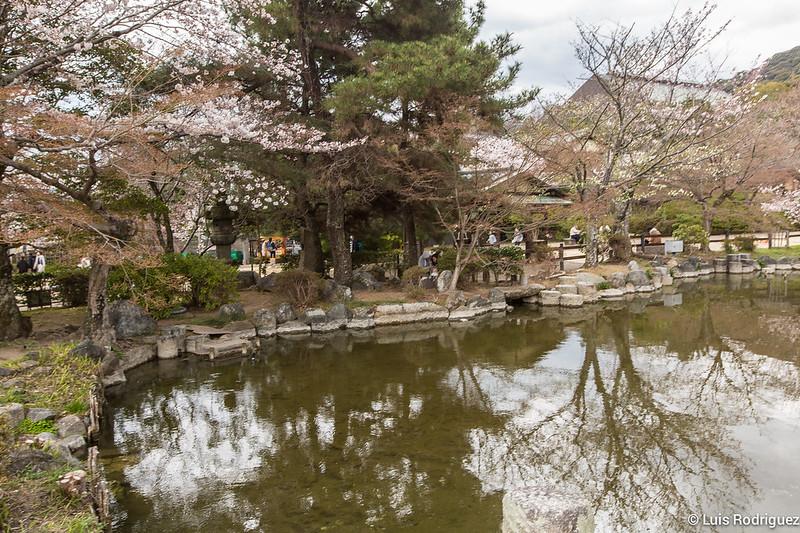 Maruyama-Park-Kioto-22