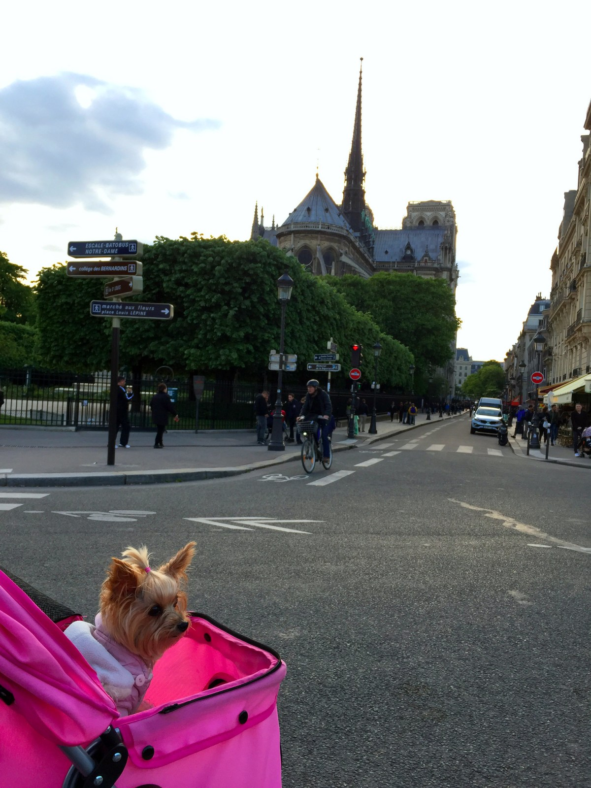 Viajar a Paris con Perro - Travel to Paris with dog viajar a paris con perro Viajar a Paris con perro 34601424555 2a54ff0f69 k