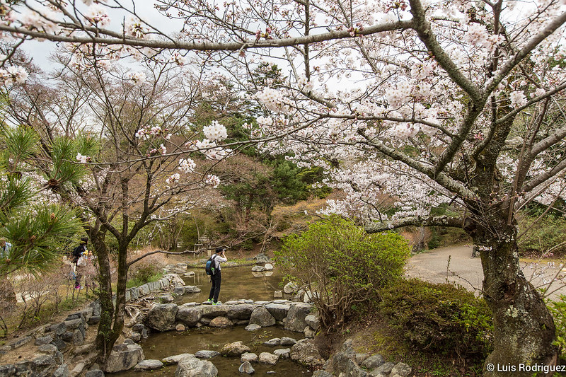Maruyama-Park-Kioto-45