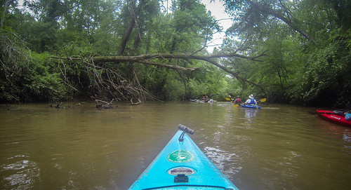 Long Cane Creek with Lowcountry Unfiltered-14