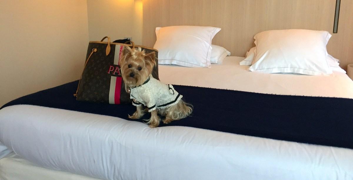 Viajar a Paris con Perro - Hotel de Nell Paris viajar a paris con perro Viajar a Paris con perro 34559999606 1fa44a2216 h
