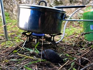 slug before cooking pot while camping on mount giona in greece - γυμνοσάλιαγκας σε κατασκήνωση στην γκιώνα