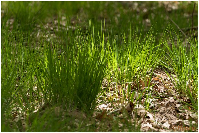 Zonnetje in het gras