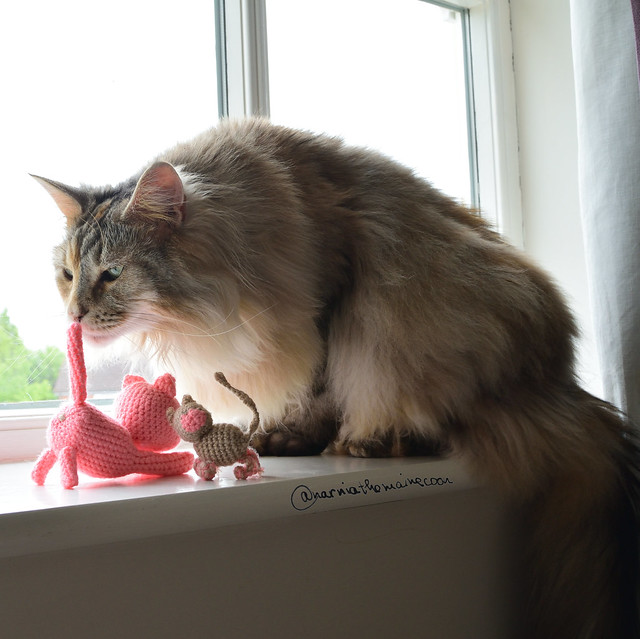 Narnia and her Kittties