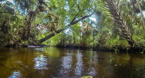 Juniper Springs Creek-27