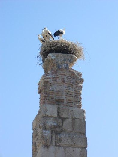 Stork's next, Selcuk