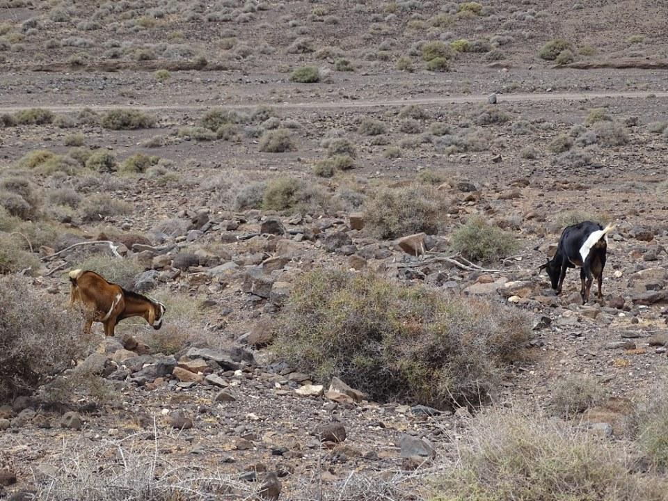 Gran Valle Flora y Fauna Isla de Fuerteventura 13