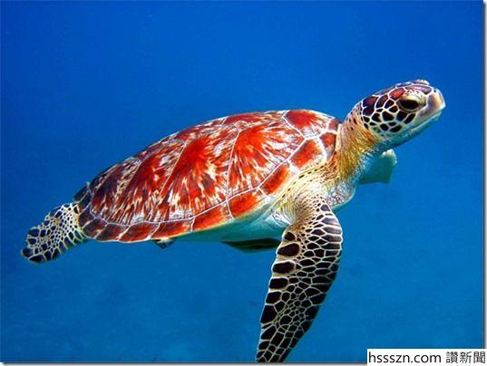 Turtle_thumb_537_404