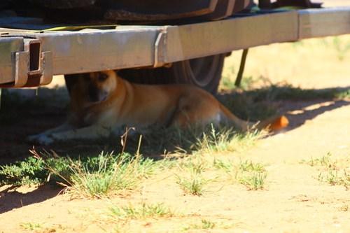 Pup Susie, enjoying some nice shade.