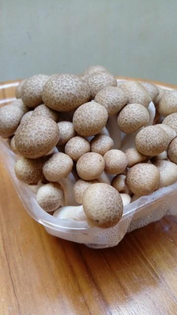 Shimaji mushroom