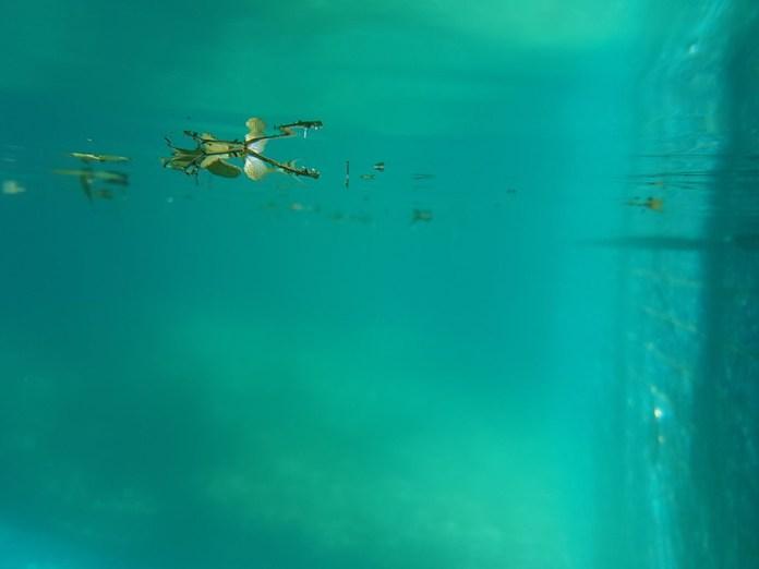 Samsung Galaxy S8+ underwater