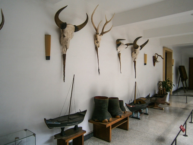 Animal Mountings