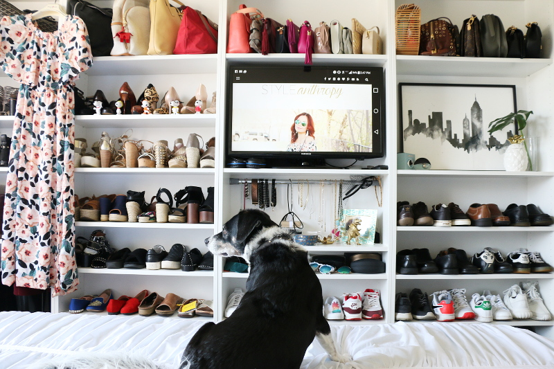 shoes-accessories-closet-shelves-louis-beagle-dog-20