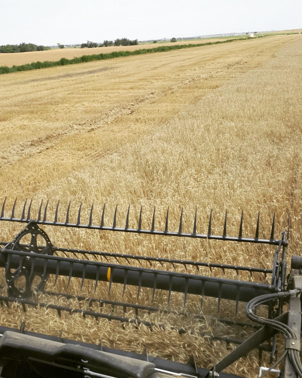 Schemper 2017 - Oklahoma Wheat Harvest