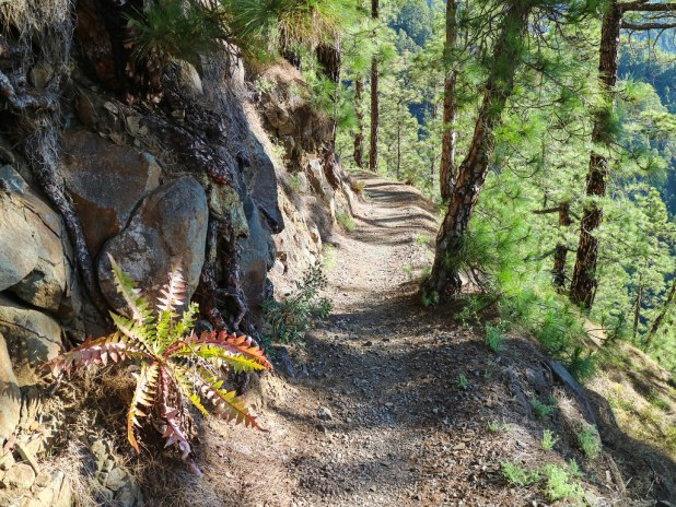 Mejor sendero de La Palma