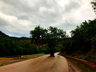 tree in the middle of the road in south greek mountains - δένδρο στην μέση του δρόμου σε επαρχιακό δρόμο κοντά στην γραβιά και γκιώνα