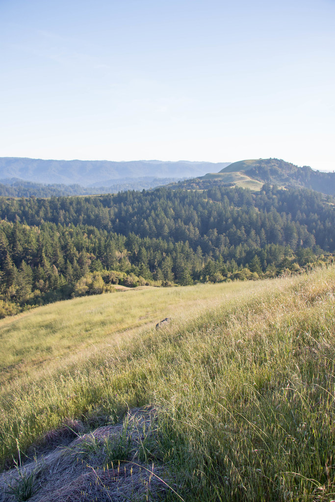 05.21. Russian Ridge Open Space Preserve